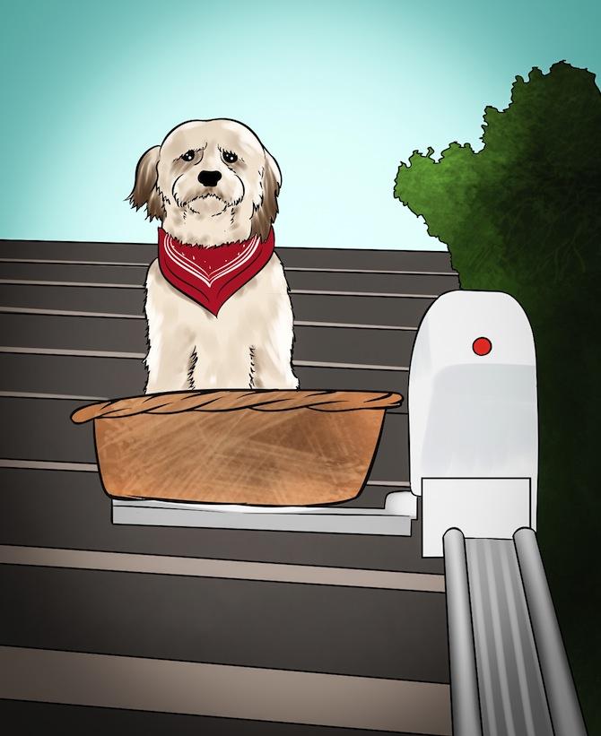 Treppenlifte für Hunde: Vorteile, Nachteile und Preise was gibt es zu beachten?